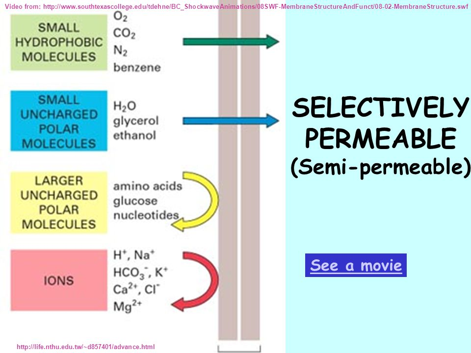 SELECTIVELY PERMEABLE (Semi-permeable)