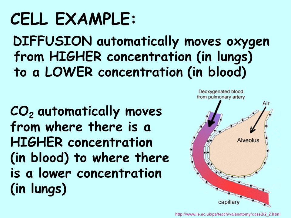 CELL EXAMPLE: DIFFUSION automatically moves oxygen from HIGHER concentration (in lungs) to a LOWER concentration (in blood)