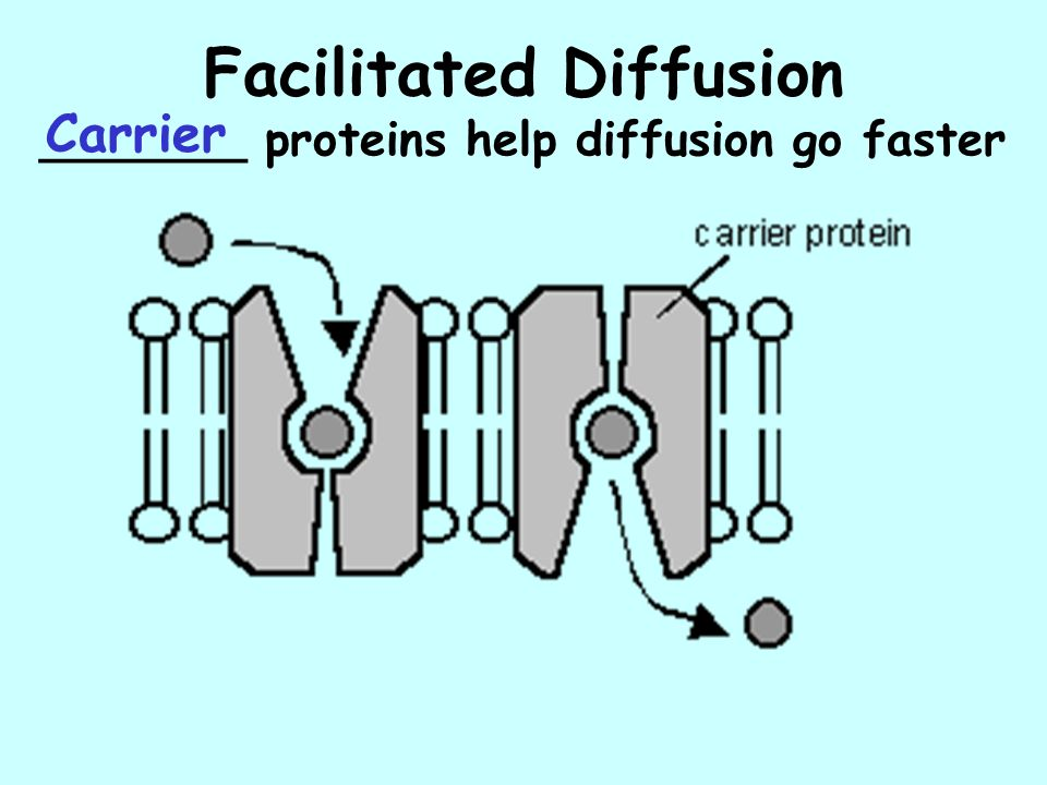 Facilitated Diffusion _______ proteins help diffusion go faster