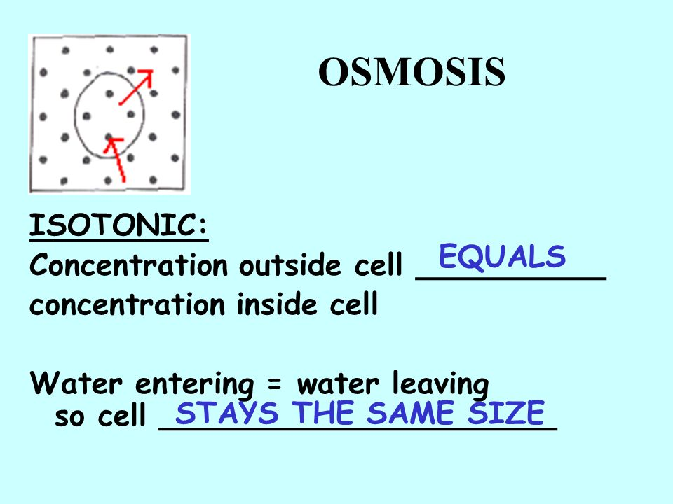 OSMOSIS ISOTONIC: Concentration outside cell __________ EQUALS
