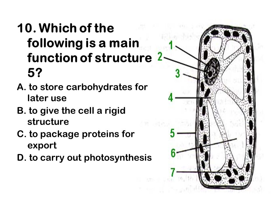 10. Which of the following is a main function of structure 5