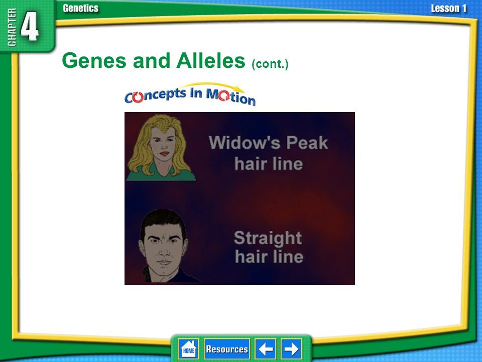 Genes and Alleles (cont.)