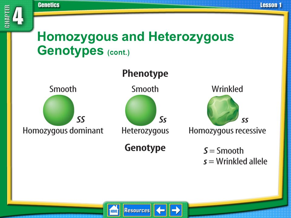 Homozygous and Heterozygous Genotypes (cont.)
