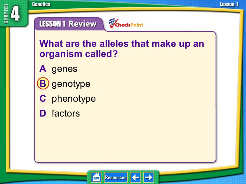 What are the alleles that make up an organism called A genes