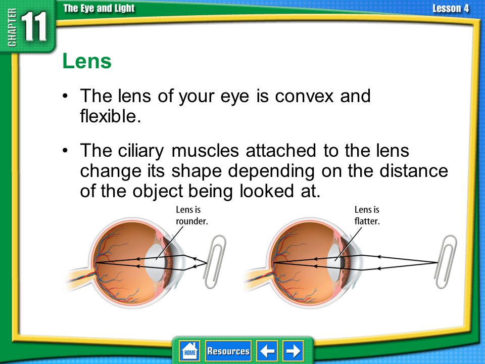 Lens The lens of your eye is convex and flexible.