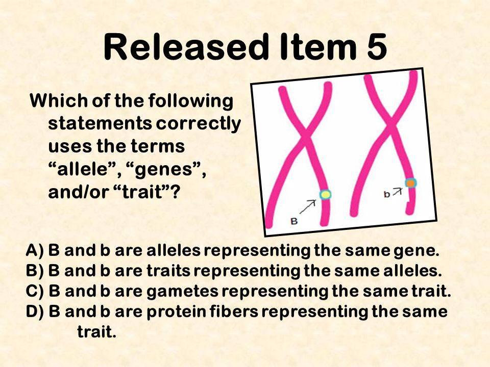 Released Item 5 Which of the following statements correctly uses the terms allele , genes , and/or trait