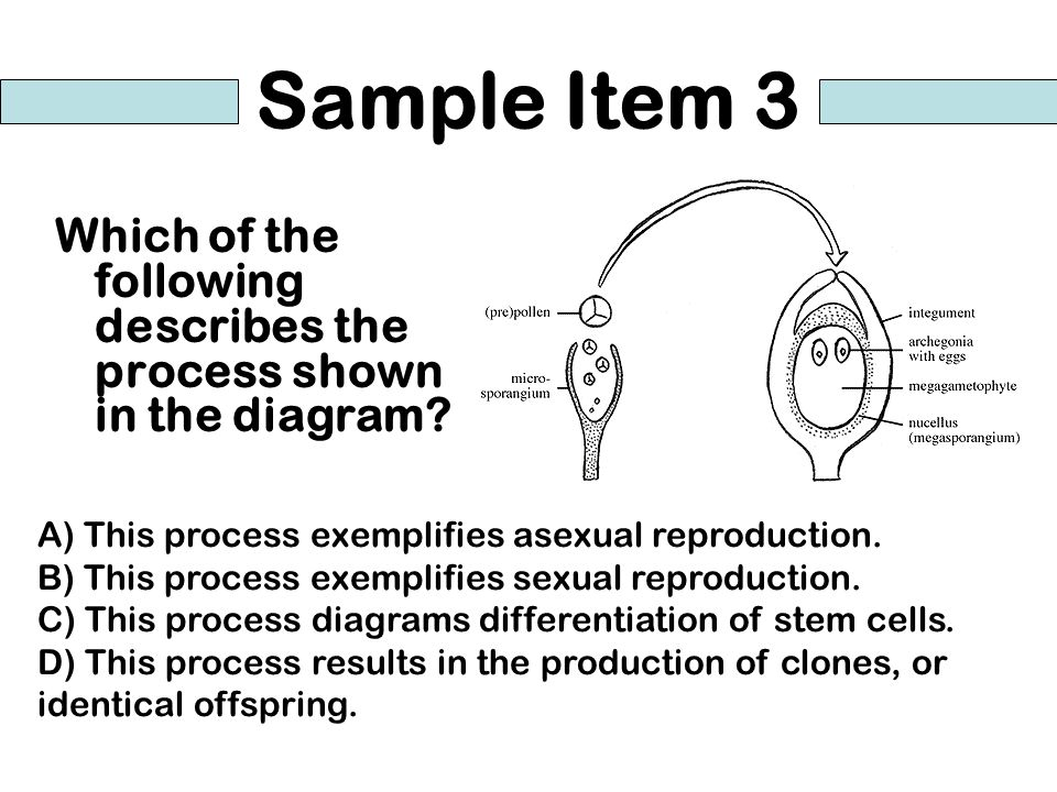 Sample Item 3 Which of the following describes the process shown in the diagram A) This process exemplifies asexual reproduction.