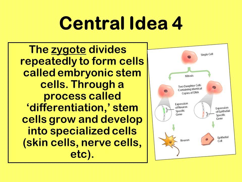 Central Idea 4