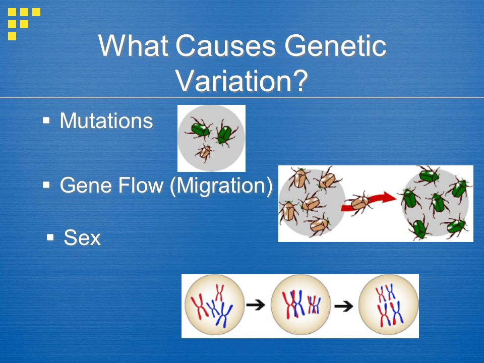 What Causes Genetic Variation