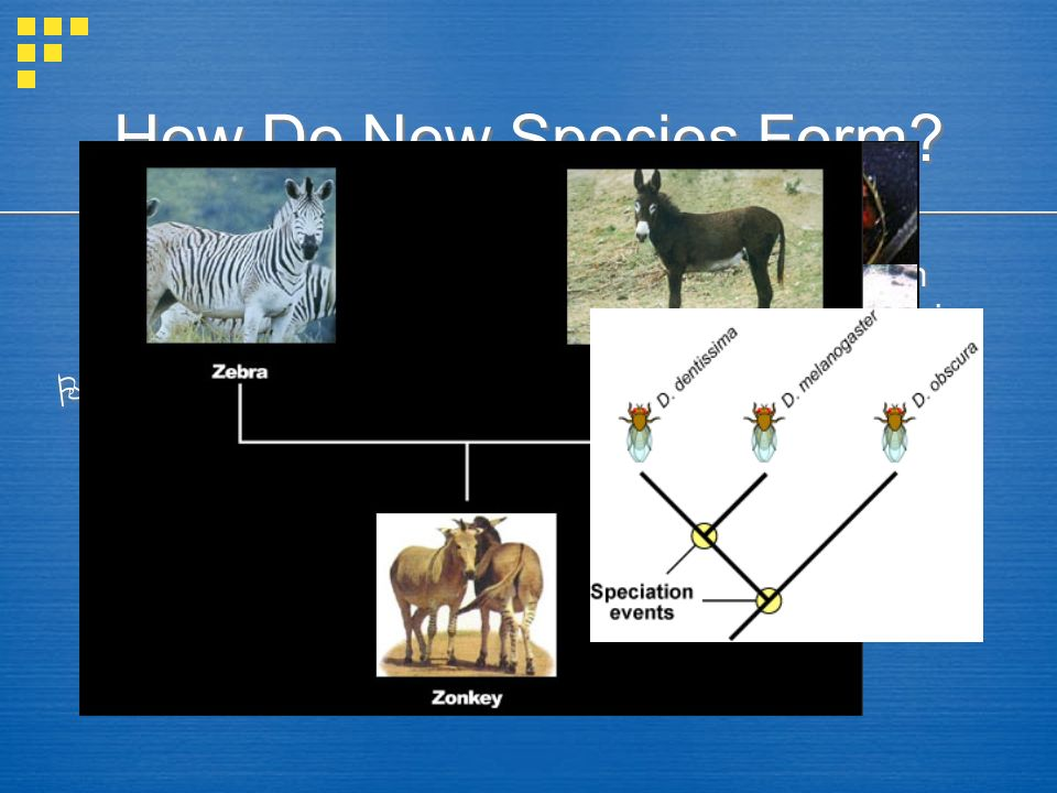 How Do New Species Form  Species =  Speciation =