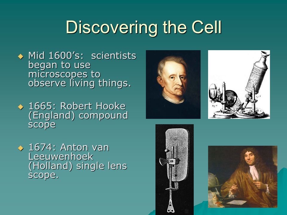 Discovering the Cell Mid 1600's: scientists began to use microscopes to observe living things. 1665: Robert Hooke (England) compound scope.
