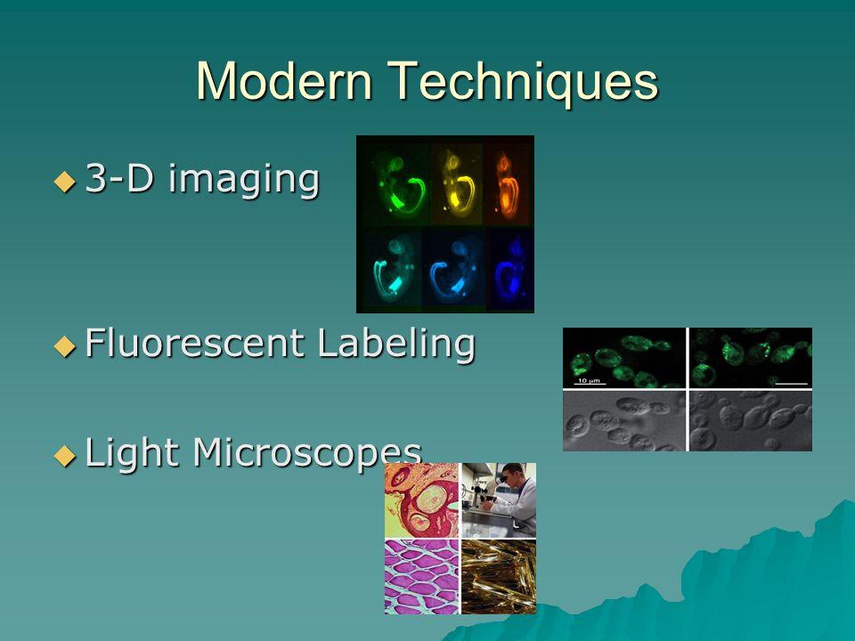 Modern Techniques 3-D imaging Fluorescent Labeling Light Microscopes