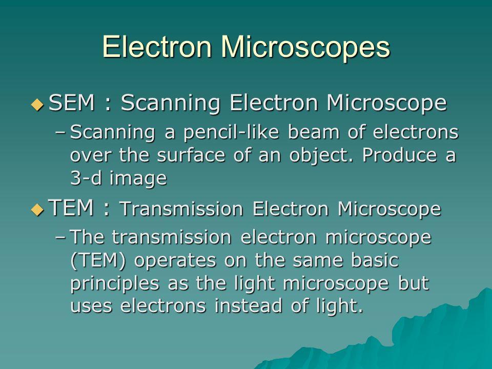 Electron Microscopes SEM : Scanning Electron Microscope