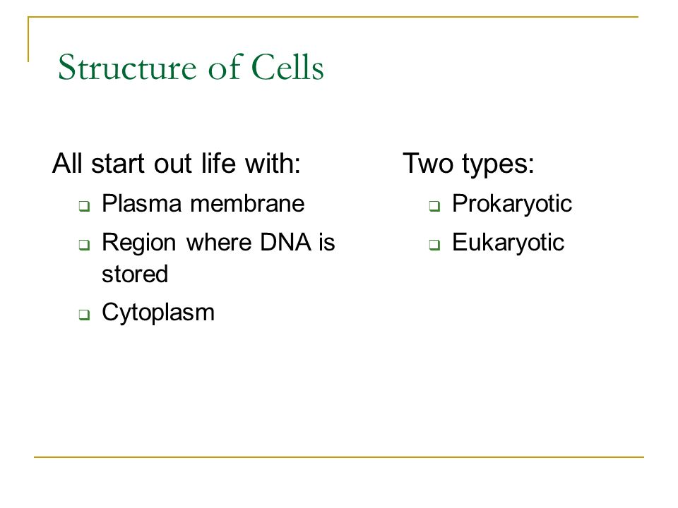 Structure of Cells All start out life with: Two types: Plasma membrane