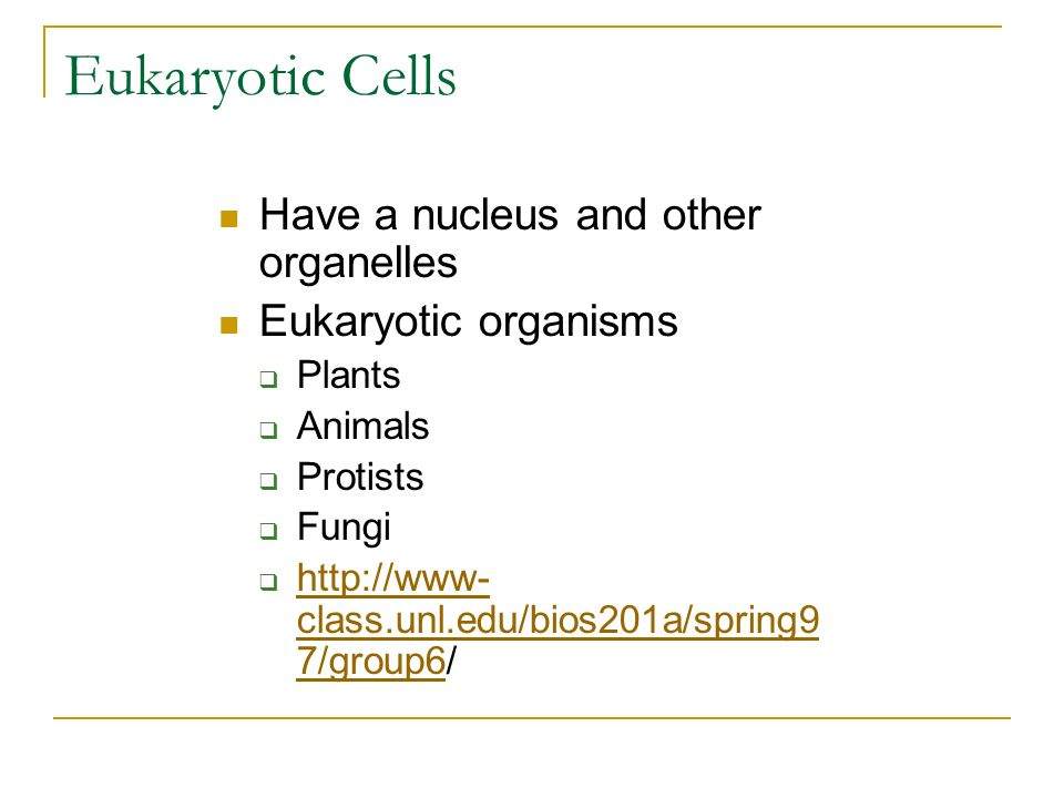 Eukaryotic Cells Have a nucleus and other organelles