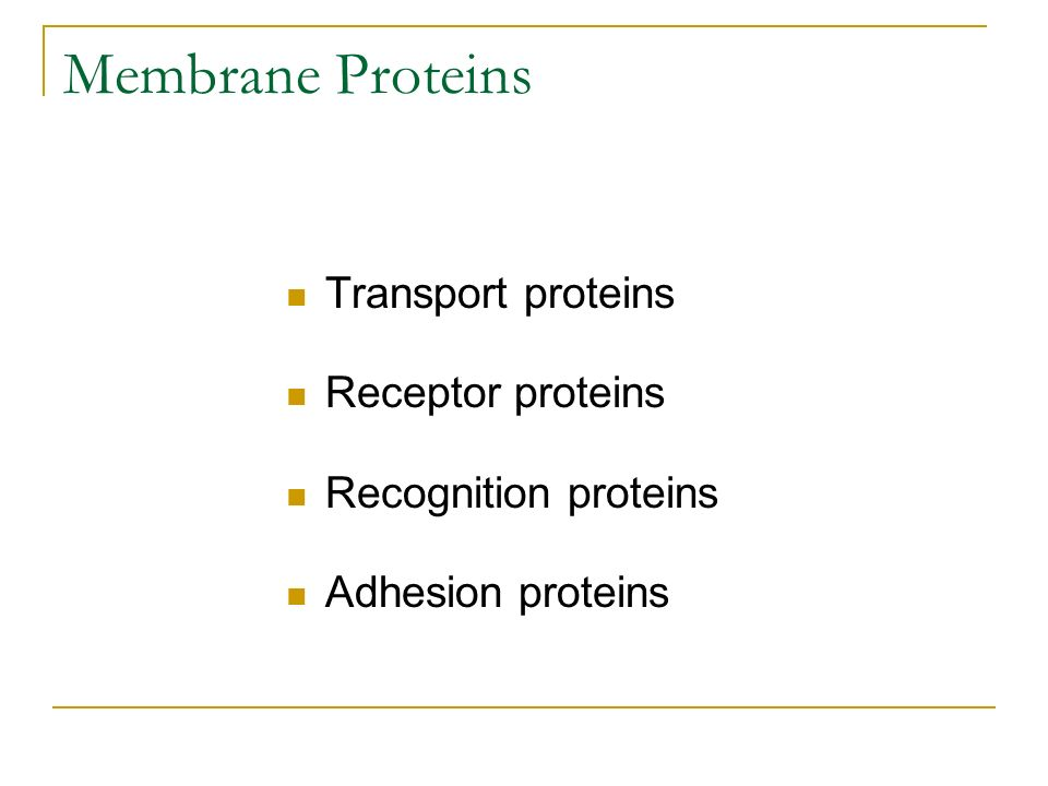Membrane Proteins Transport proteins Receptor proteins
