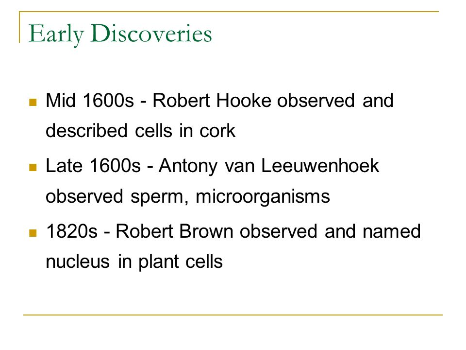 Early Discoveries Mid 1600s - Robert Hooke observed and described cells in cork. Late 1600s - Antony van Leeuwenhoek observed sperm, microorganisms.