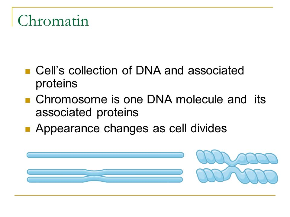 Chromatin Cell's collection of DNA and associated proteins