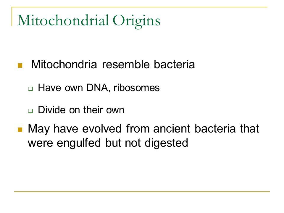 Mitochondrial Origins