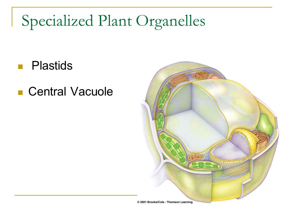 Specialized Plant Organelles