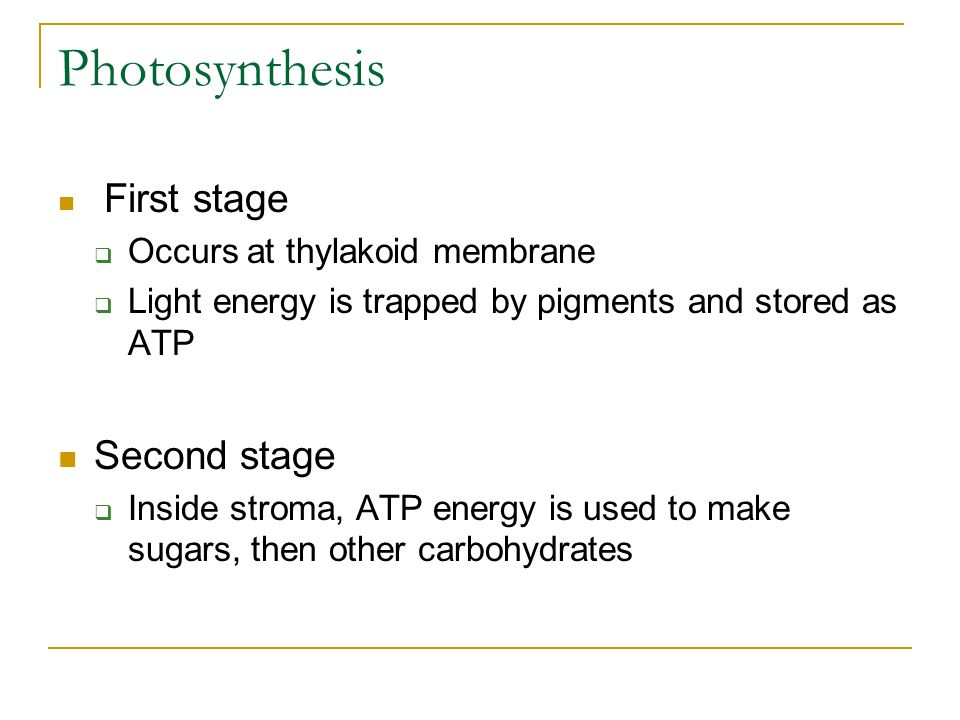 Photosynthesis Second stage First stage Occurs at thylakoid membrane