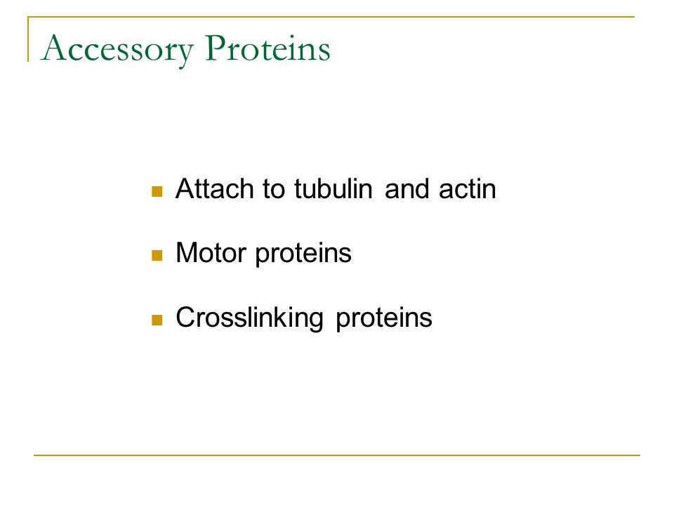 Accessory Proteins Attach to tubulin and actin Motor proteins