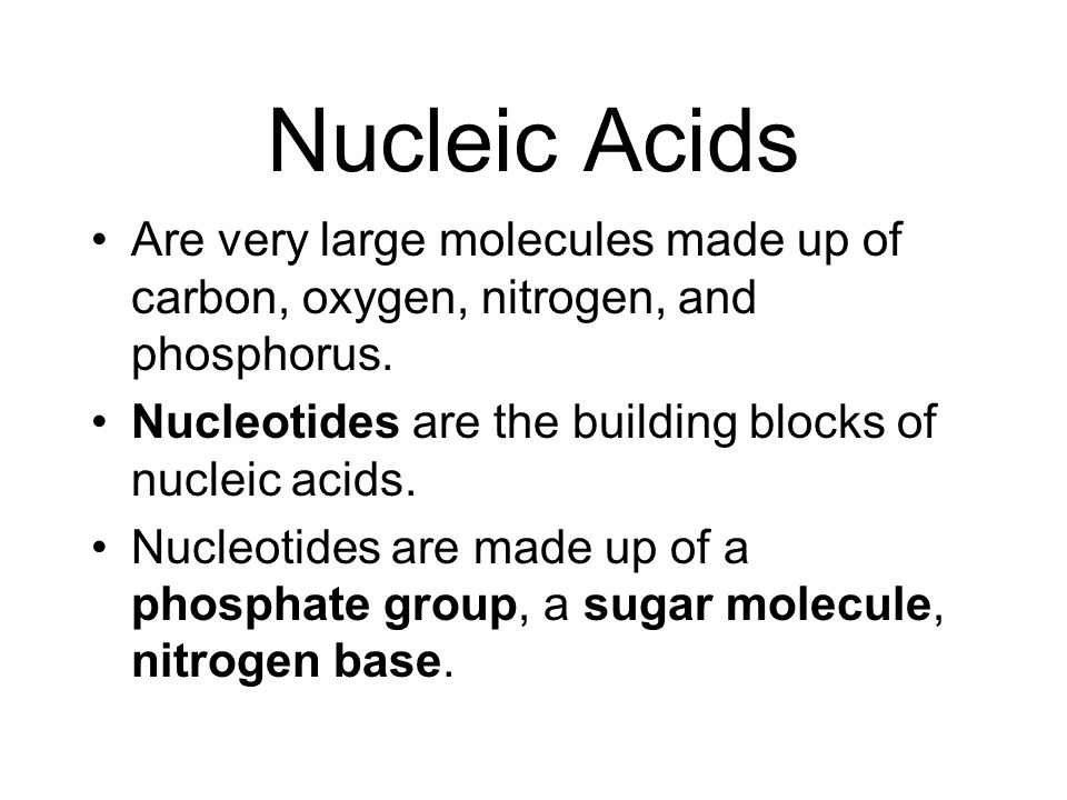 Nucleic Acids Are very large molecules made up of carbon, oxygen, nitrogen, and phosphorus. Nucleotides are the building blocks of nucleic acids.