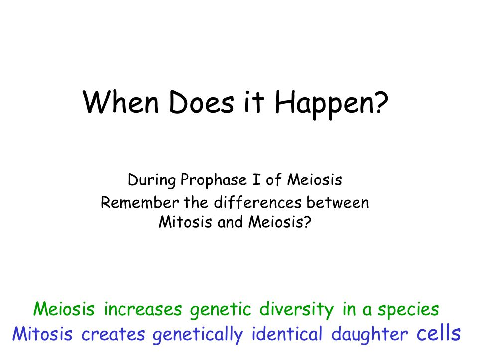 When Does it Happen Meiosis increases genetic diversity in a species