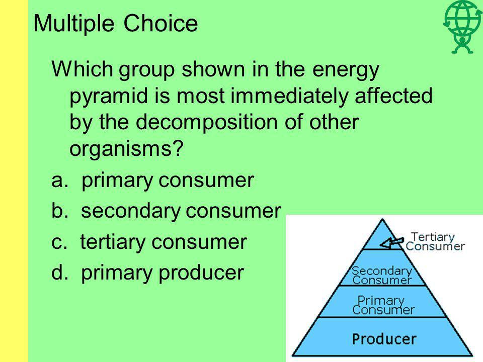 Multiple Choice Which group shown in the energy pyramid is most immediately affected by the decomposition of other organisms