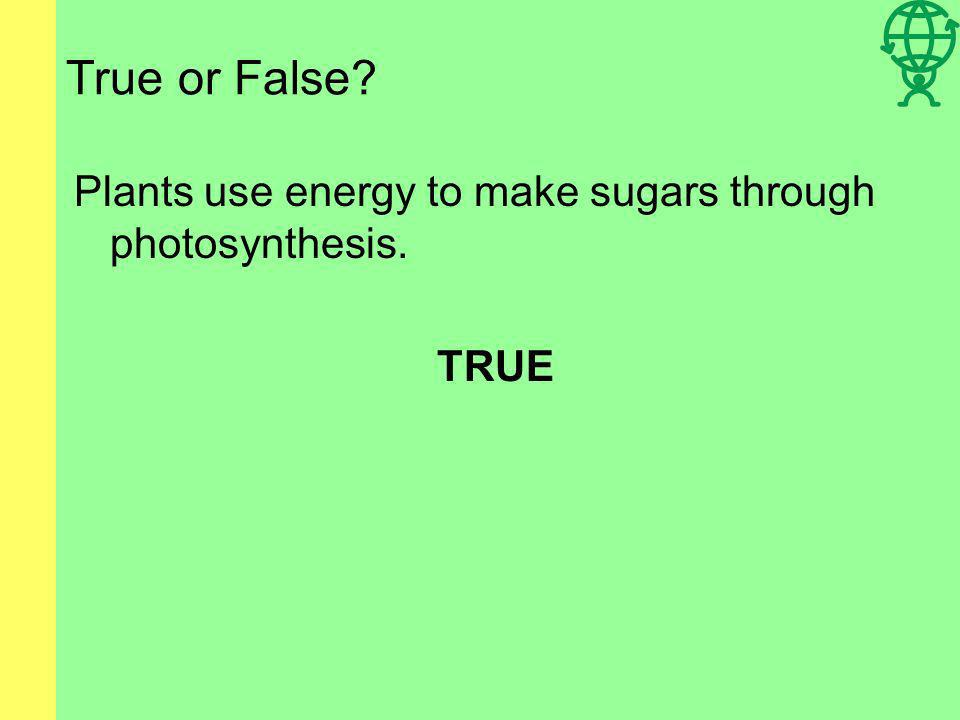 True or False Plants use energy to make sugars through photosynthesis. TRUE