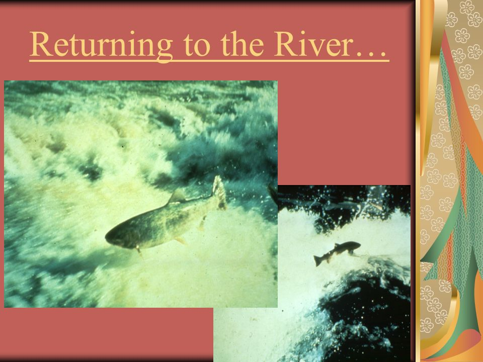 Returning to the River…