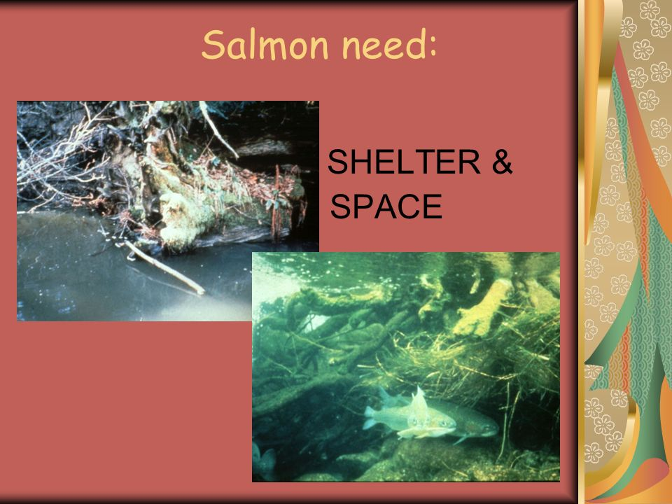 Salmon need: SHELTER & SPACE