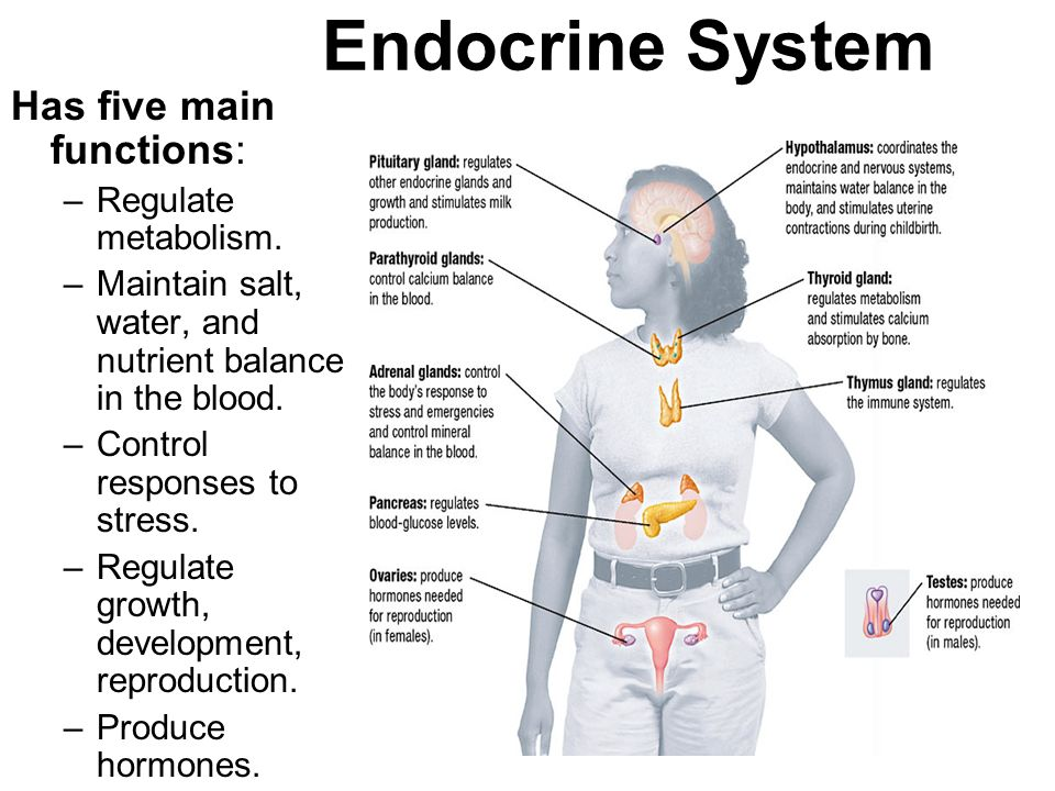 Endocrine System Has five main functions: Regulate metabolism.