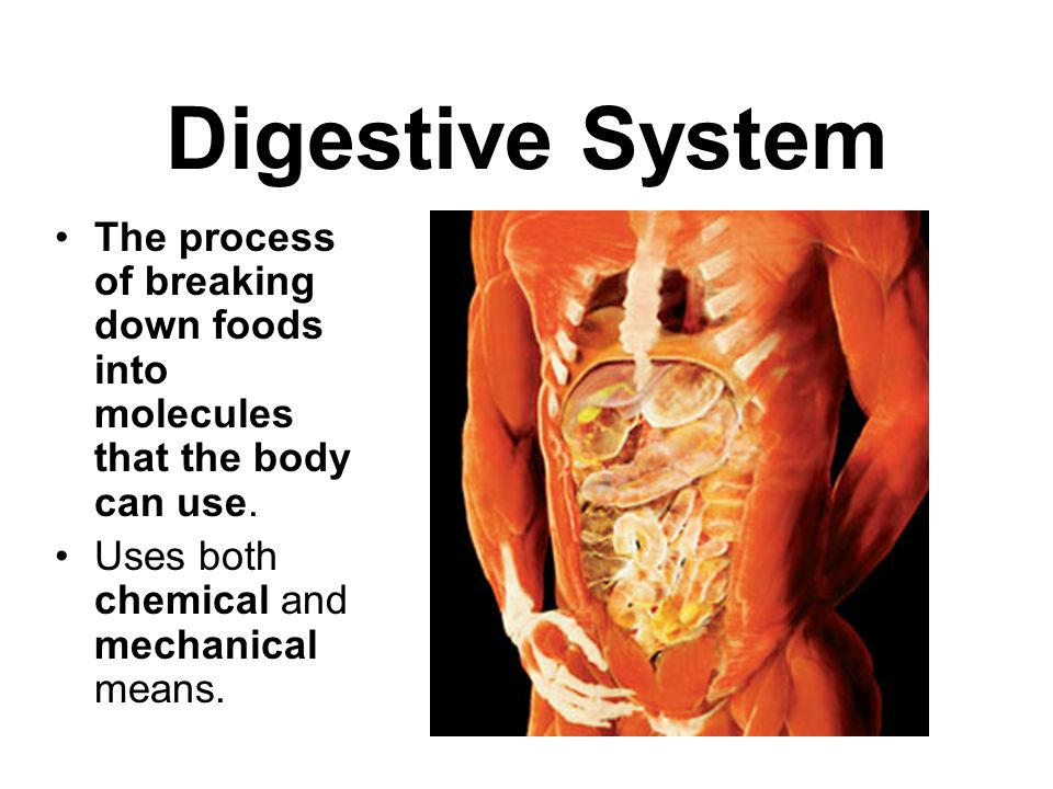 Digestive System The process of breaking down foods into molecules that the body can use.