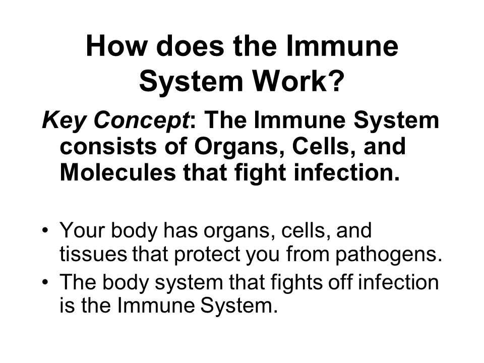How does the Immune System Work