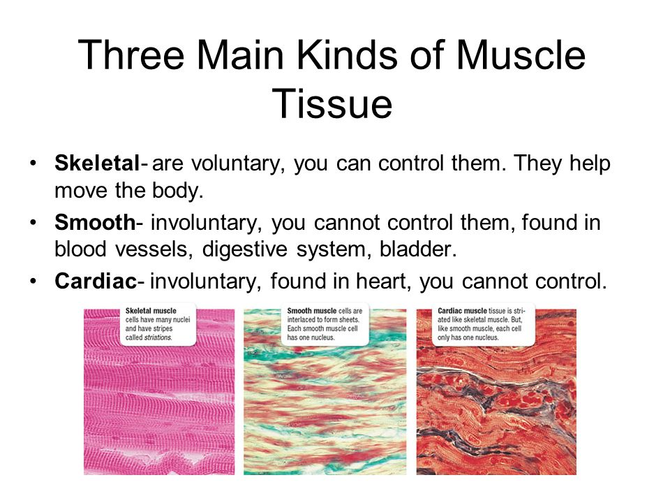 Three Main Kinds of Muscle Tissue