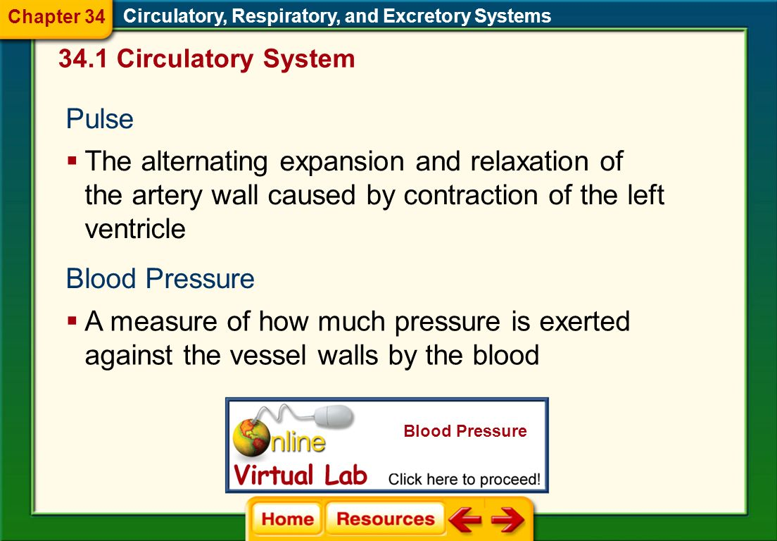Chapter 34 Circulatory, Respiratory, and Excretory Systems Circulatory System. Pulse.