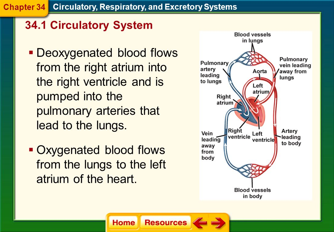 Oxygenated blood flows from the lungs to the left atrium of the heart.