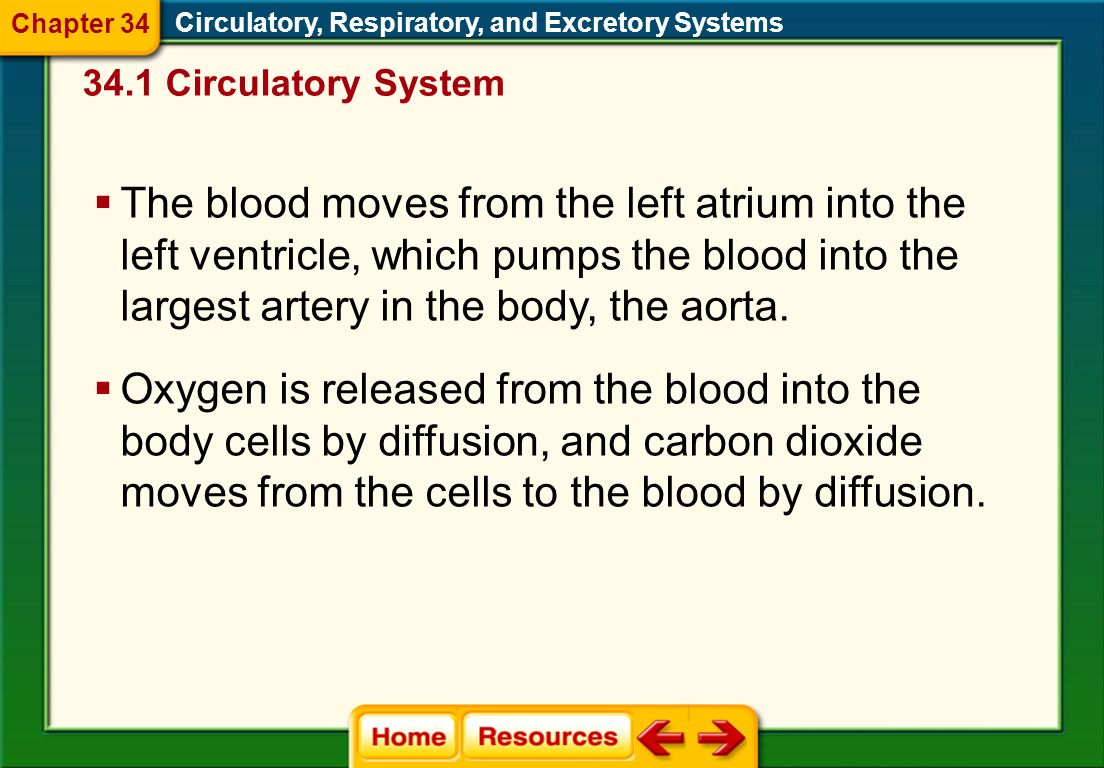 Chapter 34 Circulatory, Respiratory, and Excretory Systems Circulatory System.