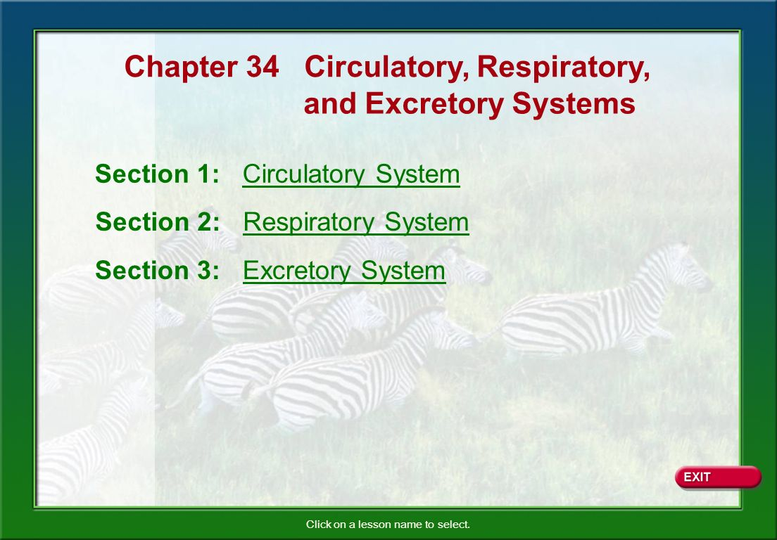 Chapter 34 Circulatory, Respiratory, - ppt video online download
