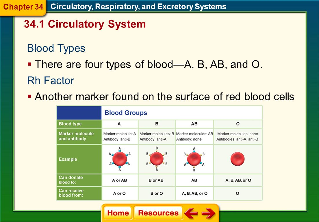 There are four types of blood—A, B, AB, and O.