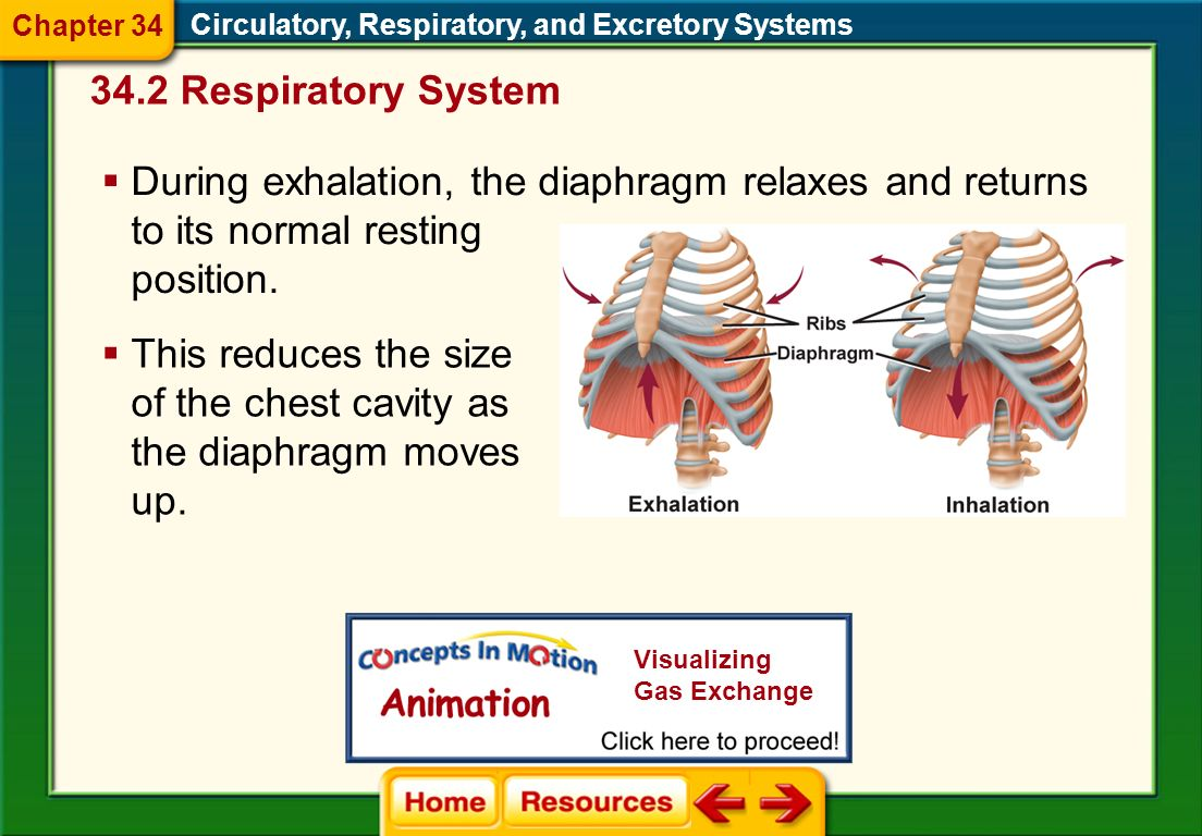 This reduces the size of the chest cavity as the diaphragm moves up.