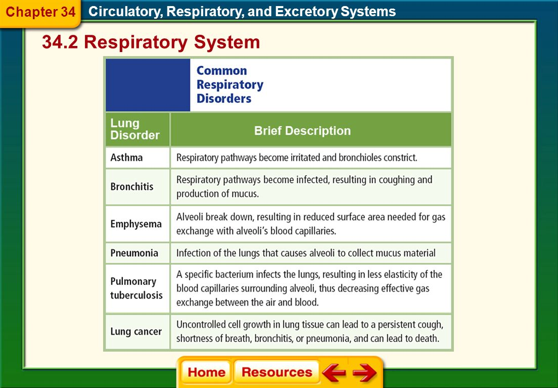 34.2 Respiratory System Chapter 34