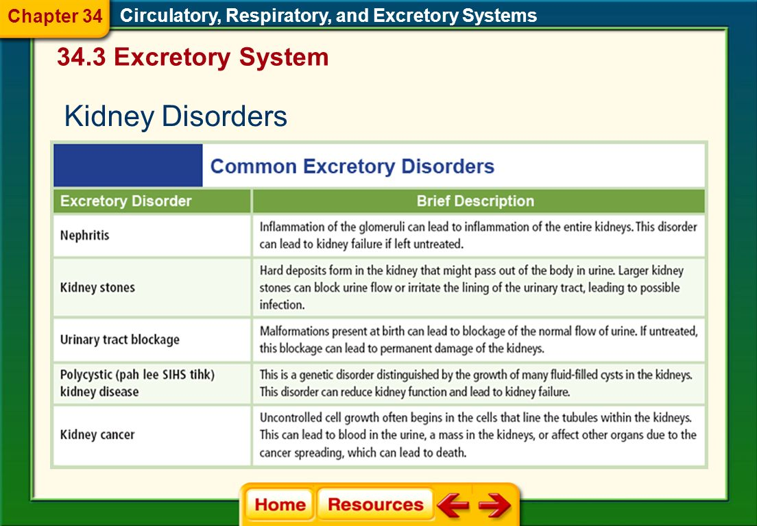 Kidney Disorders 34.3 Excretory System Chapter 34