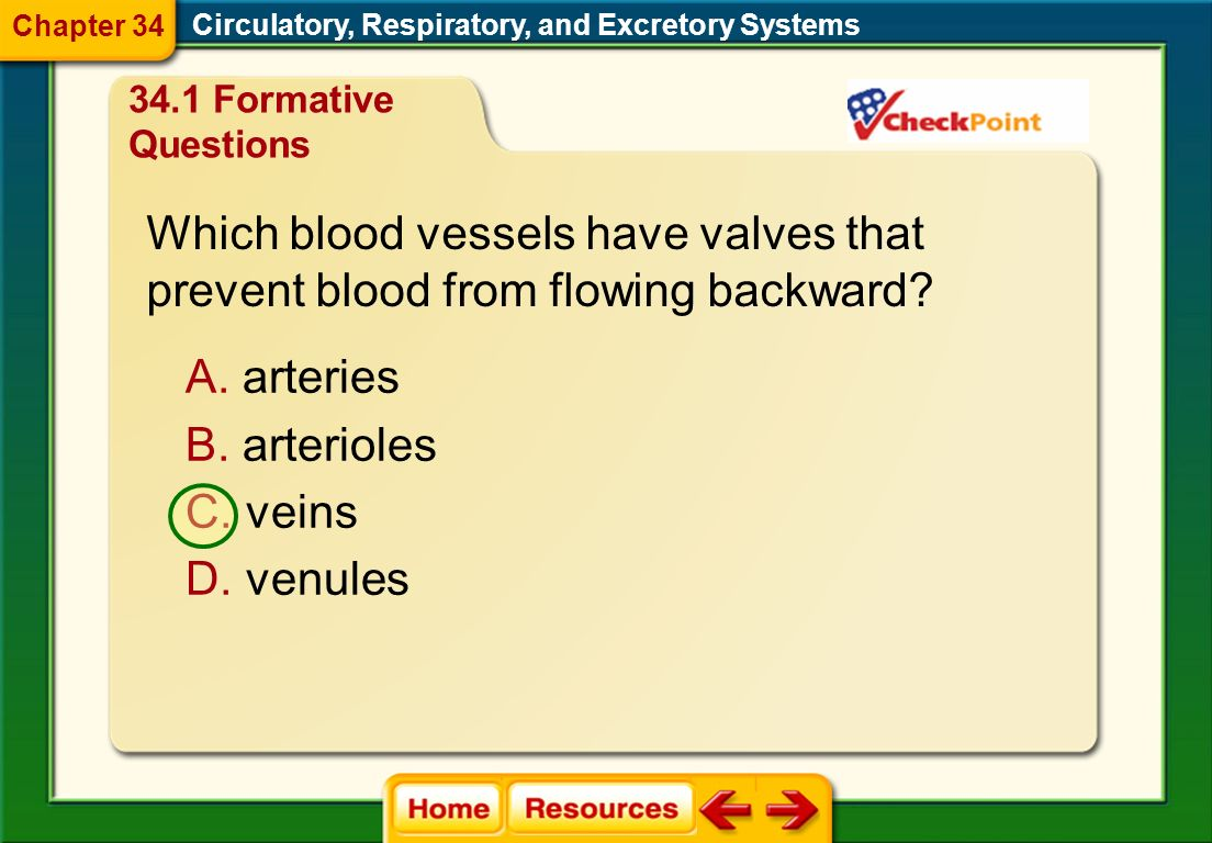Which blood vessels have valves that