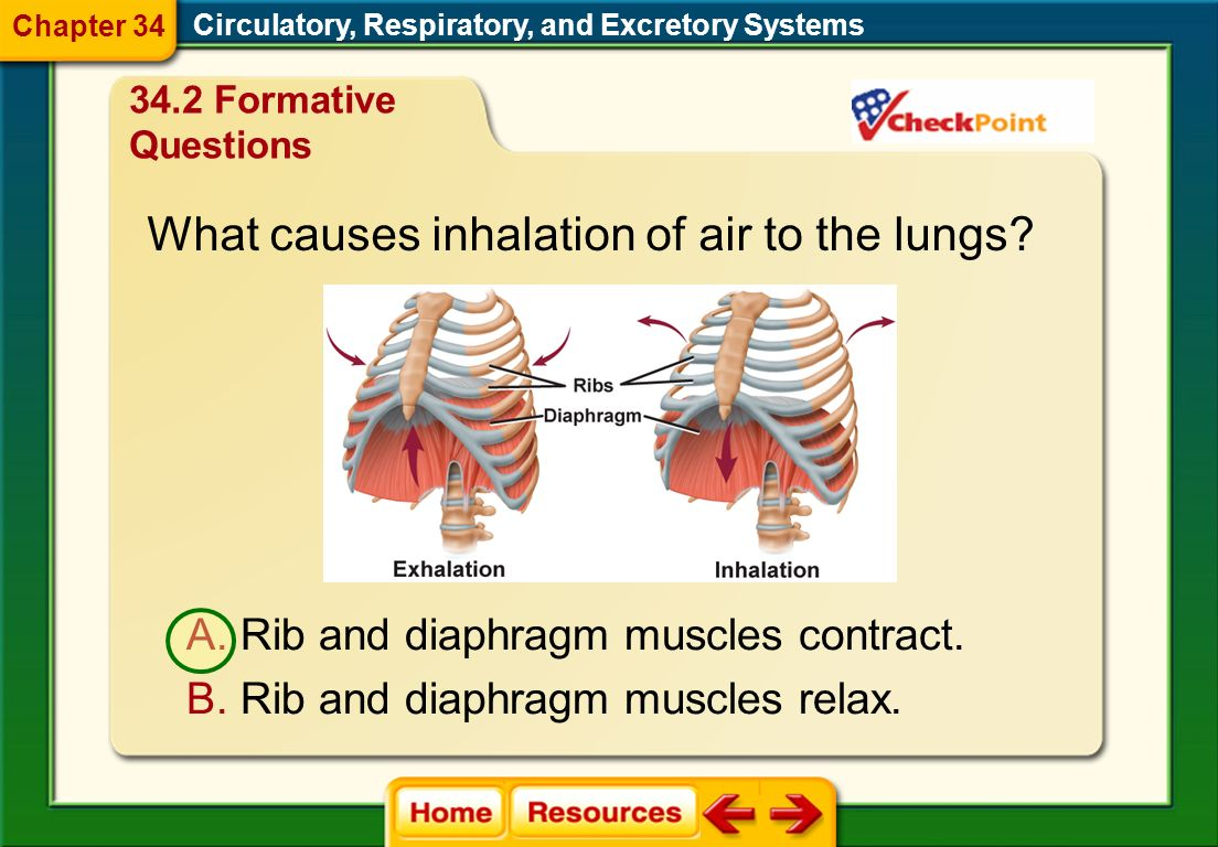 What causes inhalation of air to the lungs
