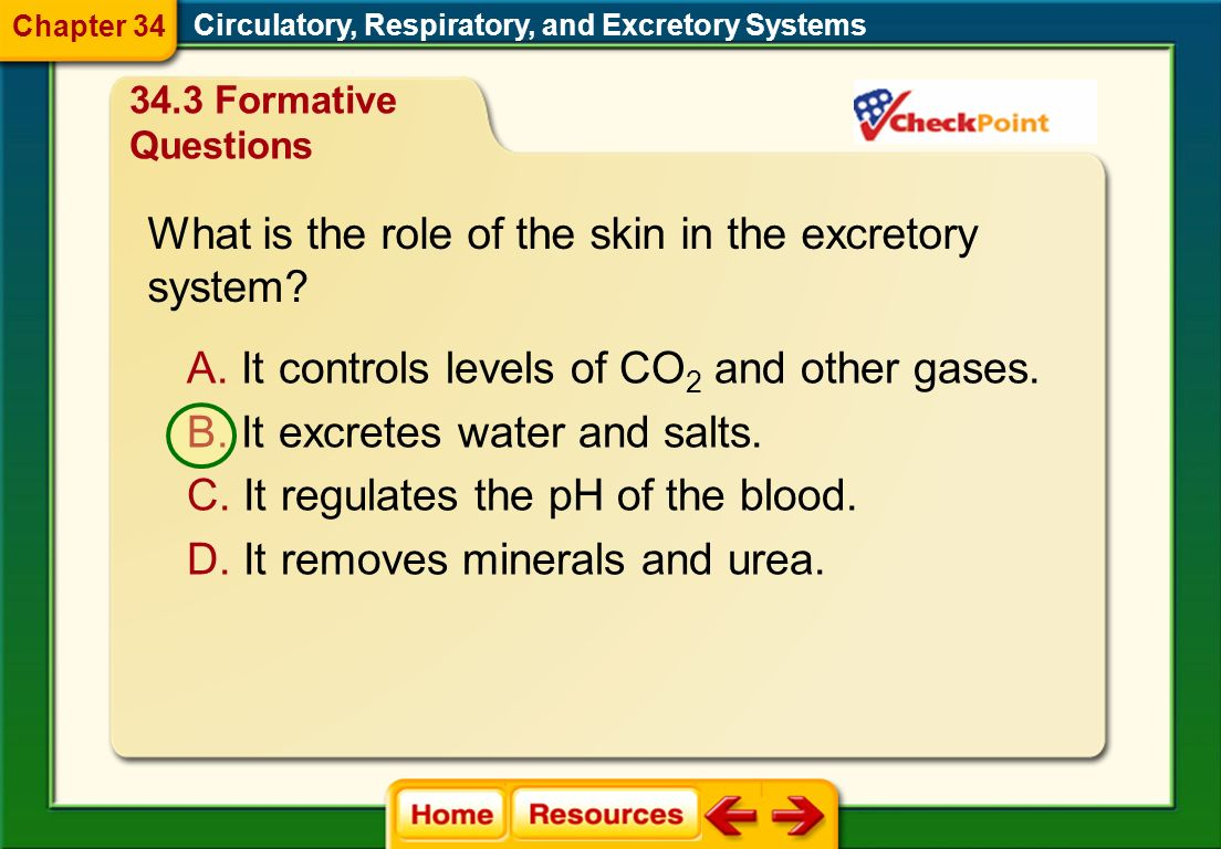 What is the role of the skin in the excretory system
