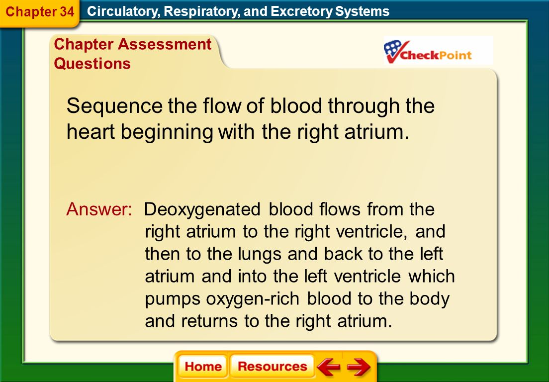 Sequence the flow of blood through the