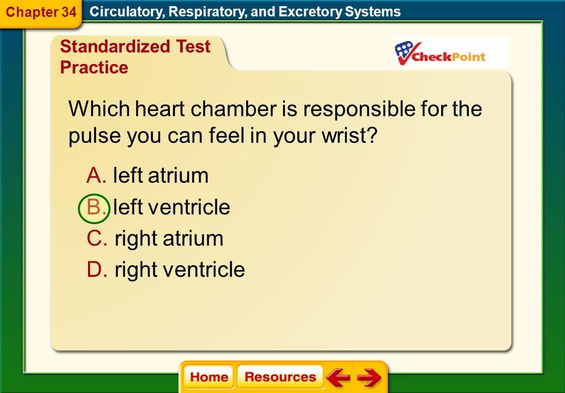 Which heart chamber is responsible for the