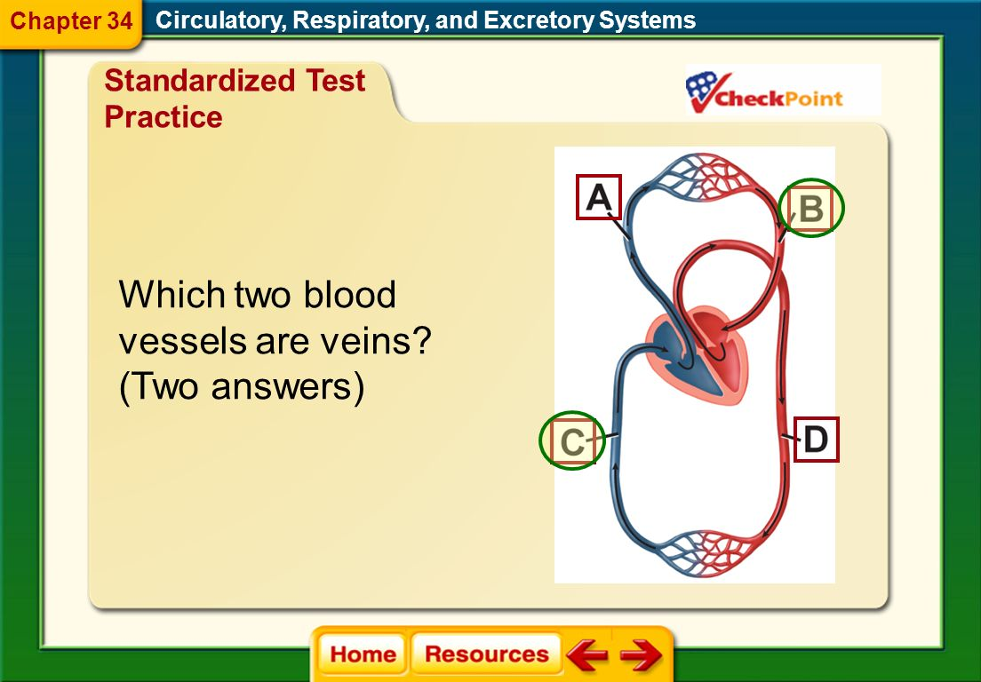 Which two blood vessels are veins (Two answers)